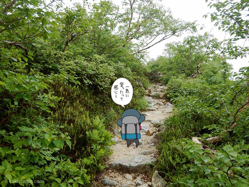 水俣乗越から西岳への登山道