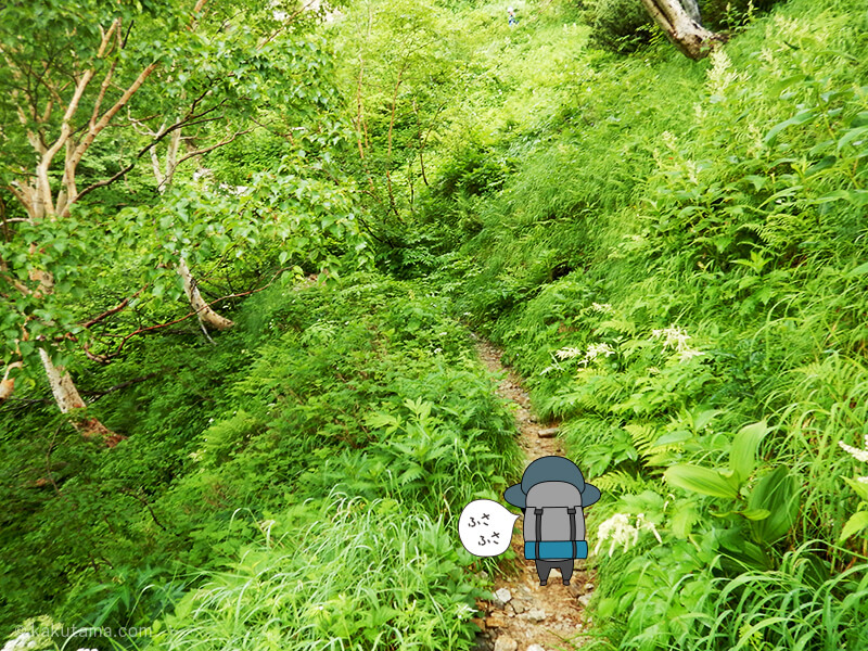 緑の道を通過