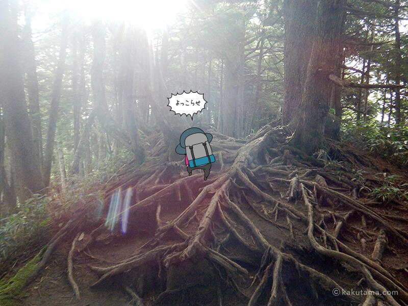 木の根っこロード