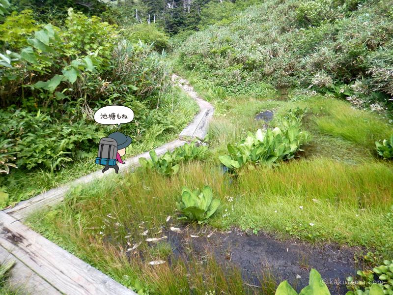 湿地帯を歩く