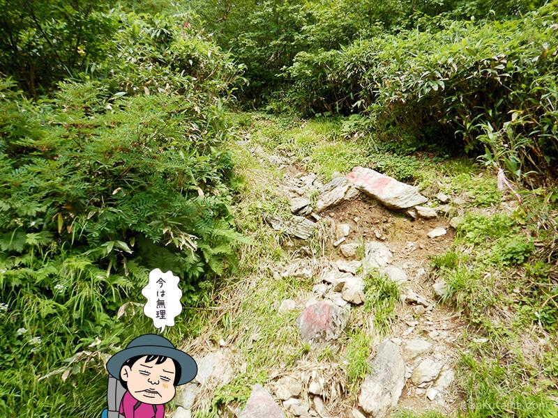 水平道からの朝日岳への登り