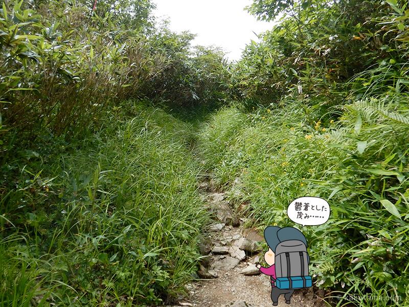 登りのある水平道