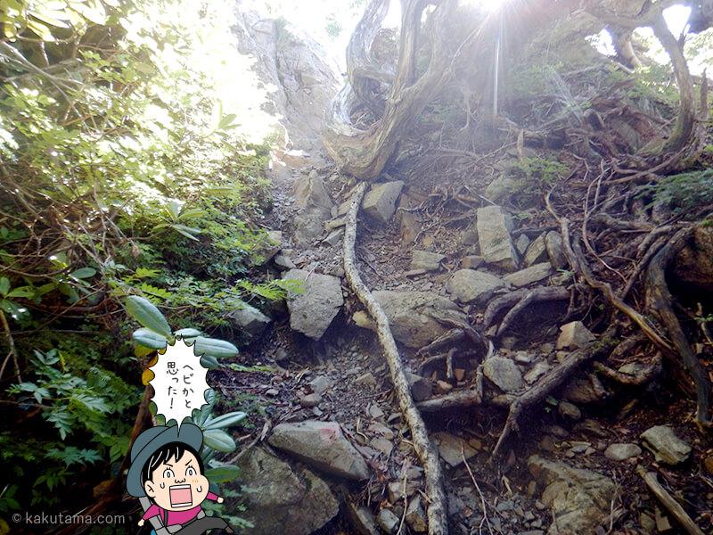 五輪の森を歩く3