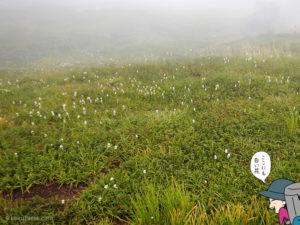 湿原と白い花