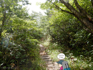 樹林帯に入る1