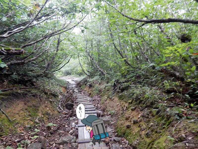 樹林帯に入る2