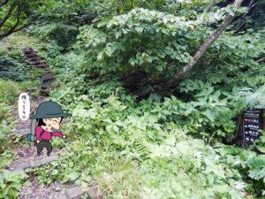 樹林帯をひたすら歩く2