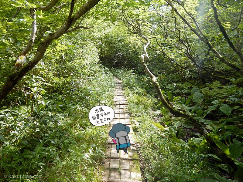 樹林帯の木道を歩く1