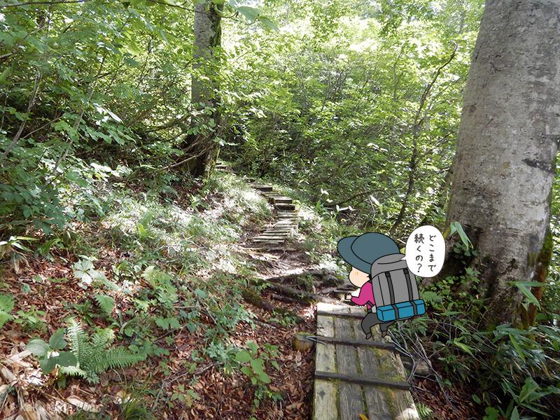 樹林帯の木道を歩く2