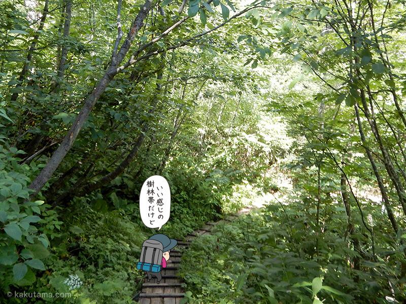 樹林帯の木道を歩く3