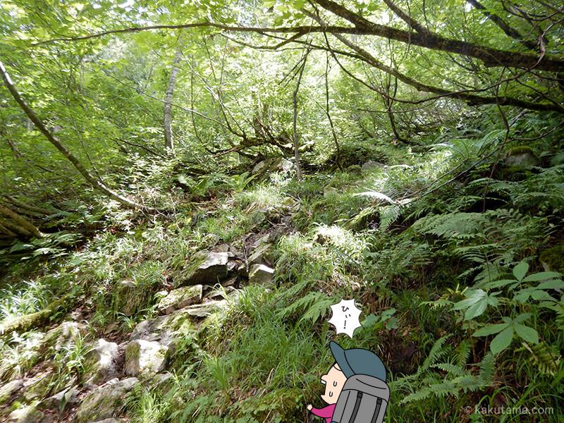 樹林帯を登る