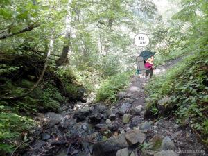 樹林帯を登る4