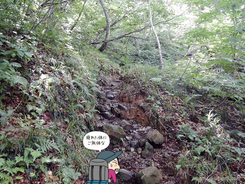 樹林帯を登る5