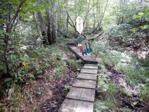 樹林帯の木道を登る1