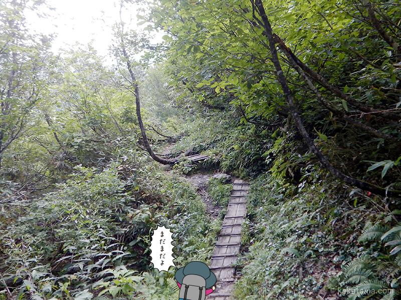 樹林帯の木道を登る4