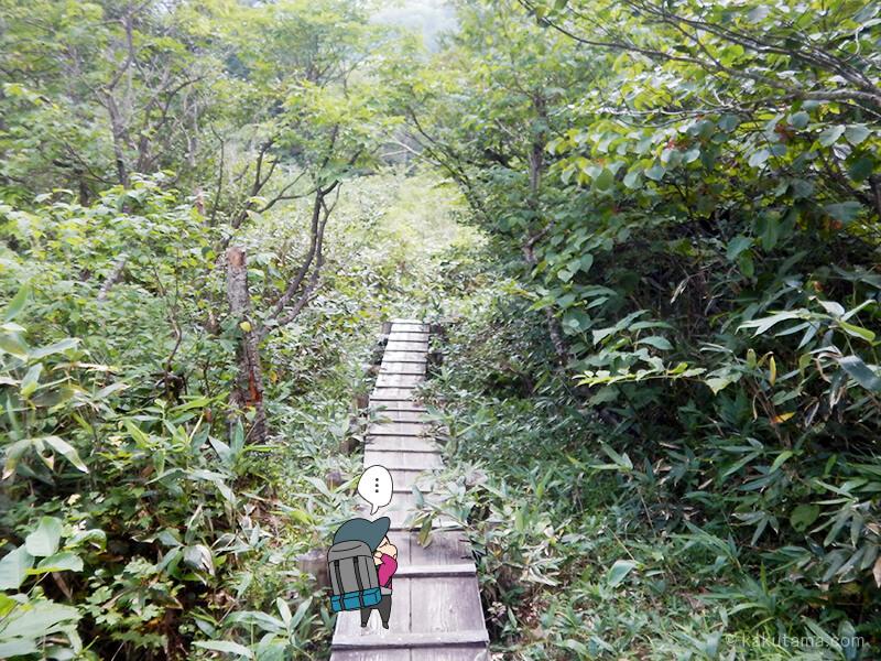 樹林帯の木道を登る5