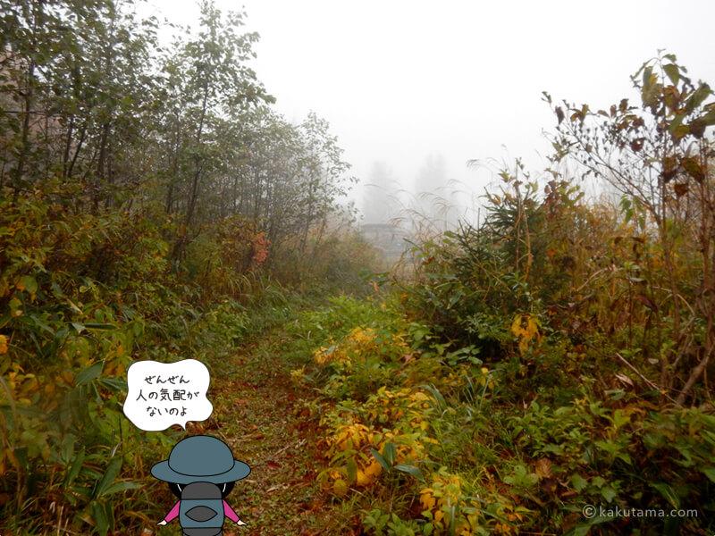 北野口登山口登山道を歩く1