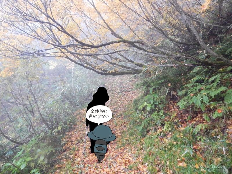 北野口登山口登山道を歩く8