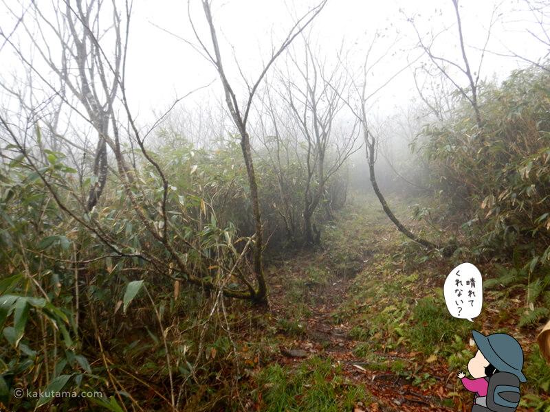 北野口登山口から風吹岳へ向かって登る2