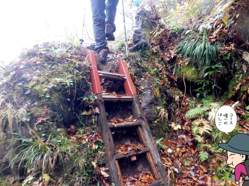 北野口登山道コース上唯一のはしご