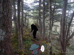 北野口登山口から風吹岳へ向かって登る7