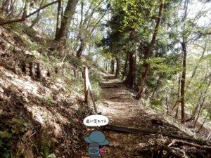 大倉尾根登山道は荒れていた