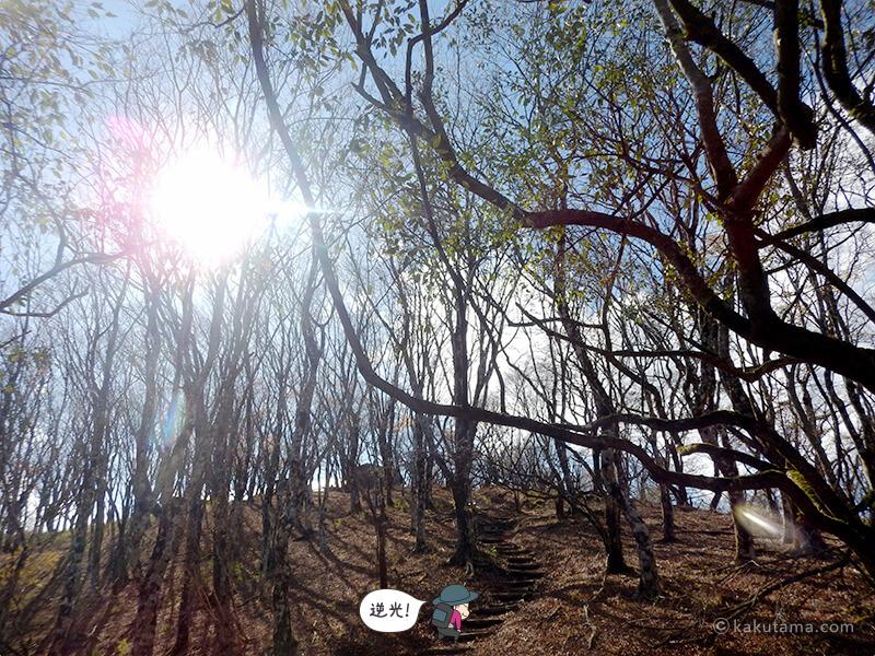 鍋割山へ向かって登る