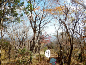 紅葉が出てきた鍋割山からの下山1