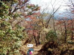 紅葉が出てきた鍋割山からの下山2