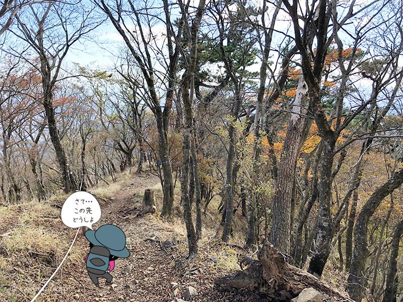 紅葉が出てきた鍋割山からの下山3