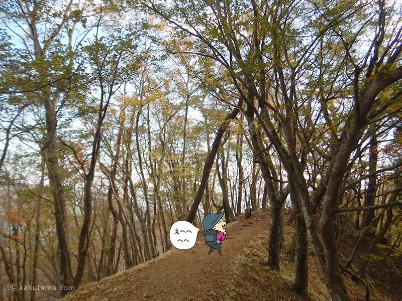 木々に囲まれた道を下る3