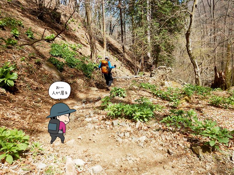両神山清滝小屋から表参道コースを下る1