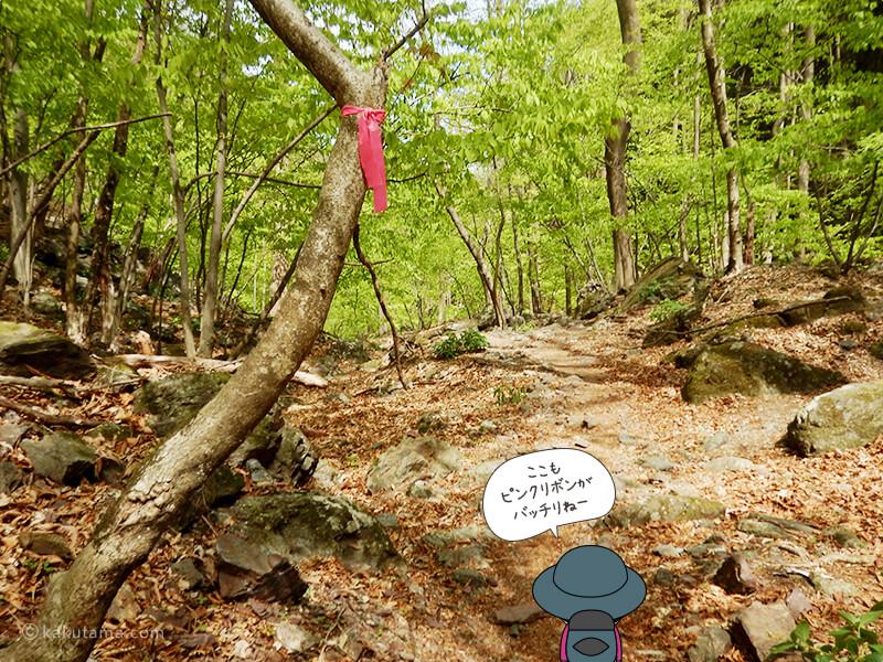 ピンクリボンが鮮やかな両神山表参道コース