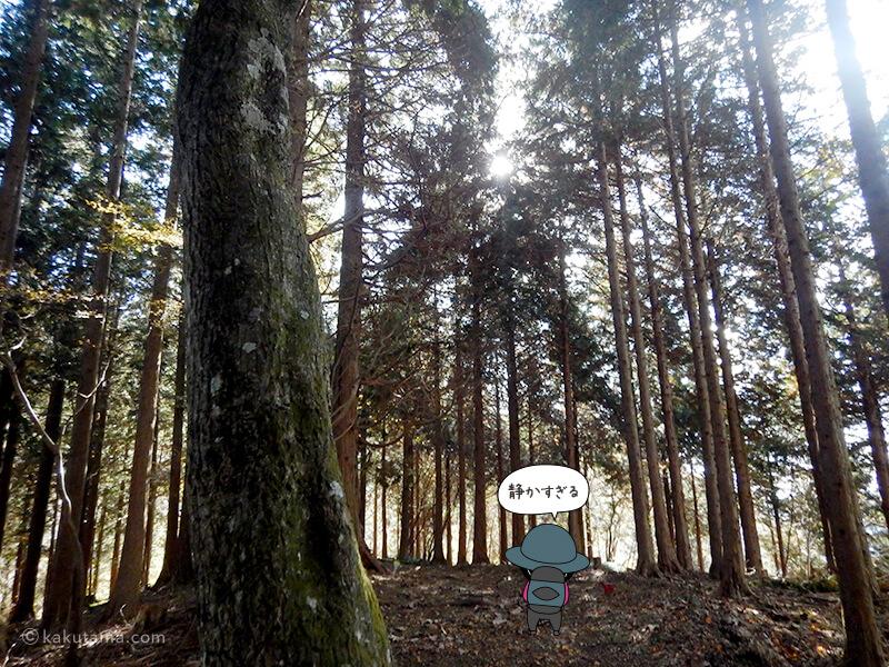 後沢乗越からの登りが植栽木に変わる