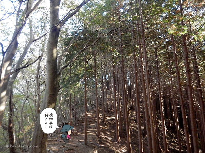 ひたすら植栽木の道が続く