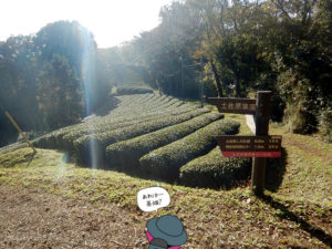東屋と茶畑