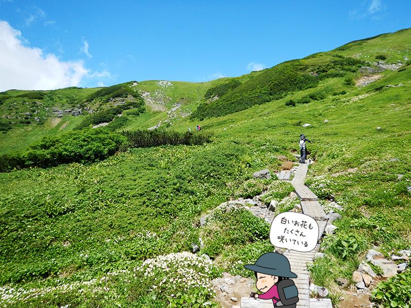 緑に囲まれた道を登る