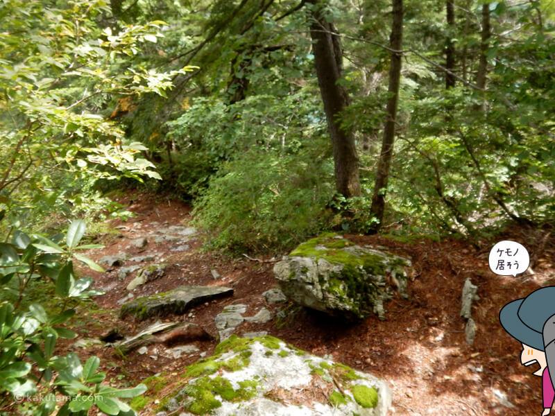 樹林帯を進む2