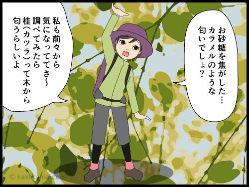 山に香る甘い匂いの正体は桂の木の4コマ漫画2