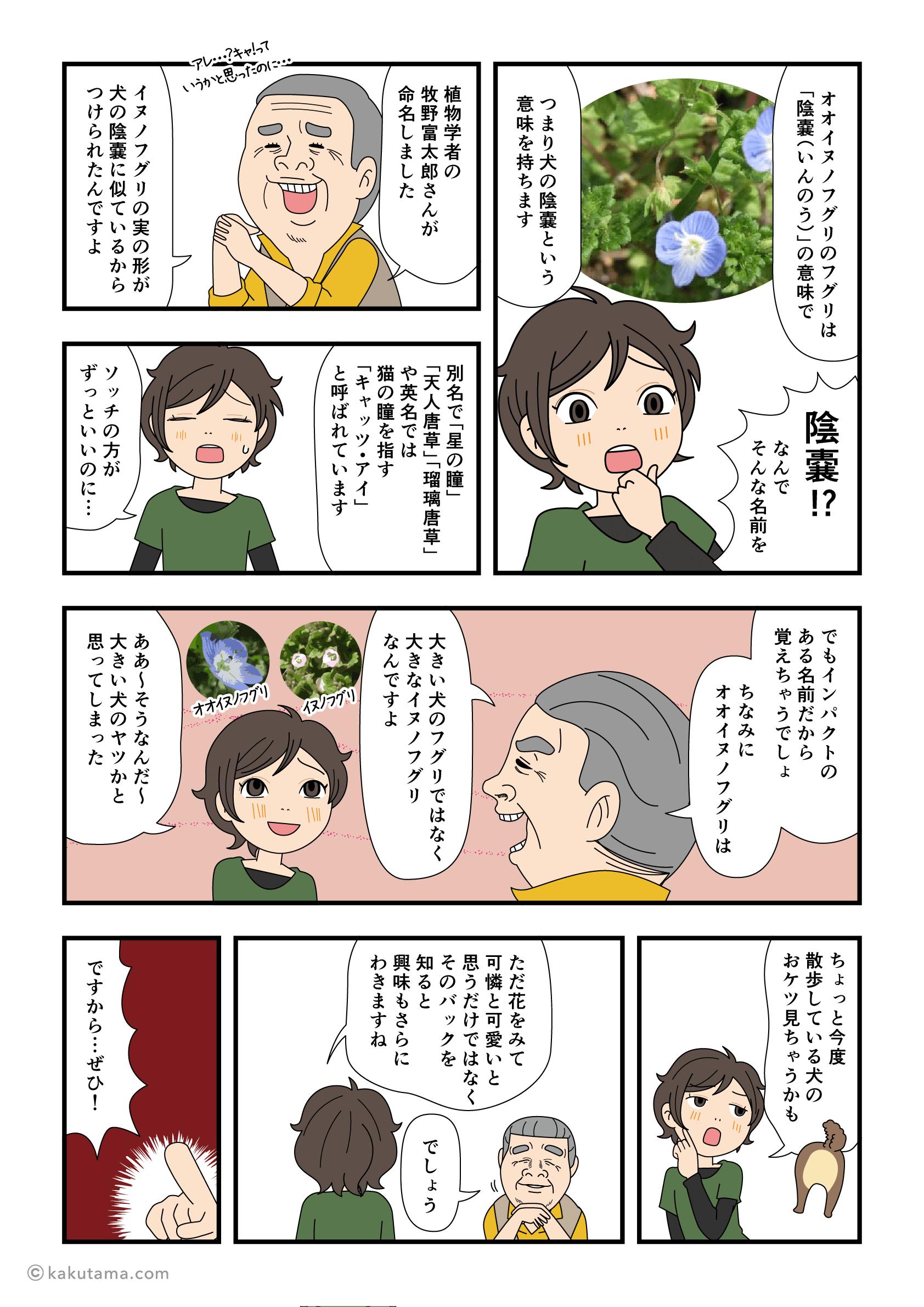 オオイヌノフグリの名前の由来を聞いて花に興味が出る漫画