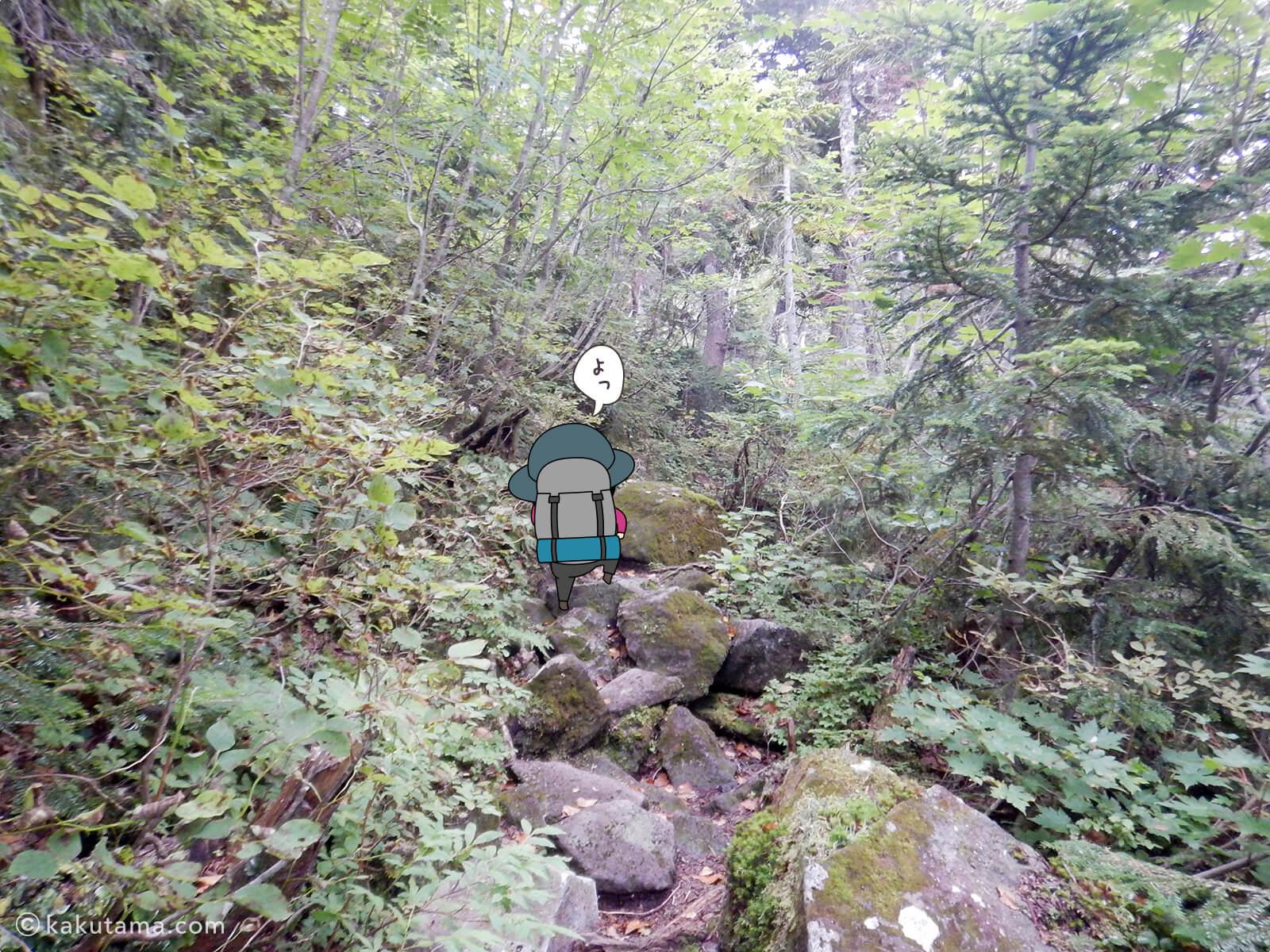 再び樹林帯を登る2