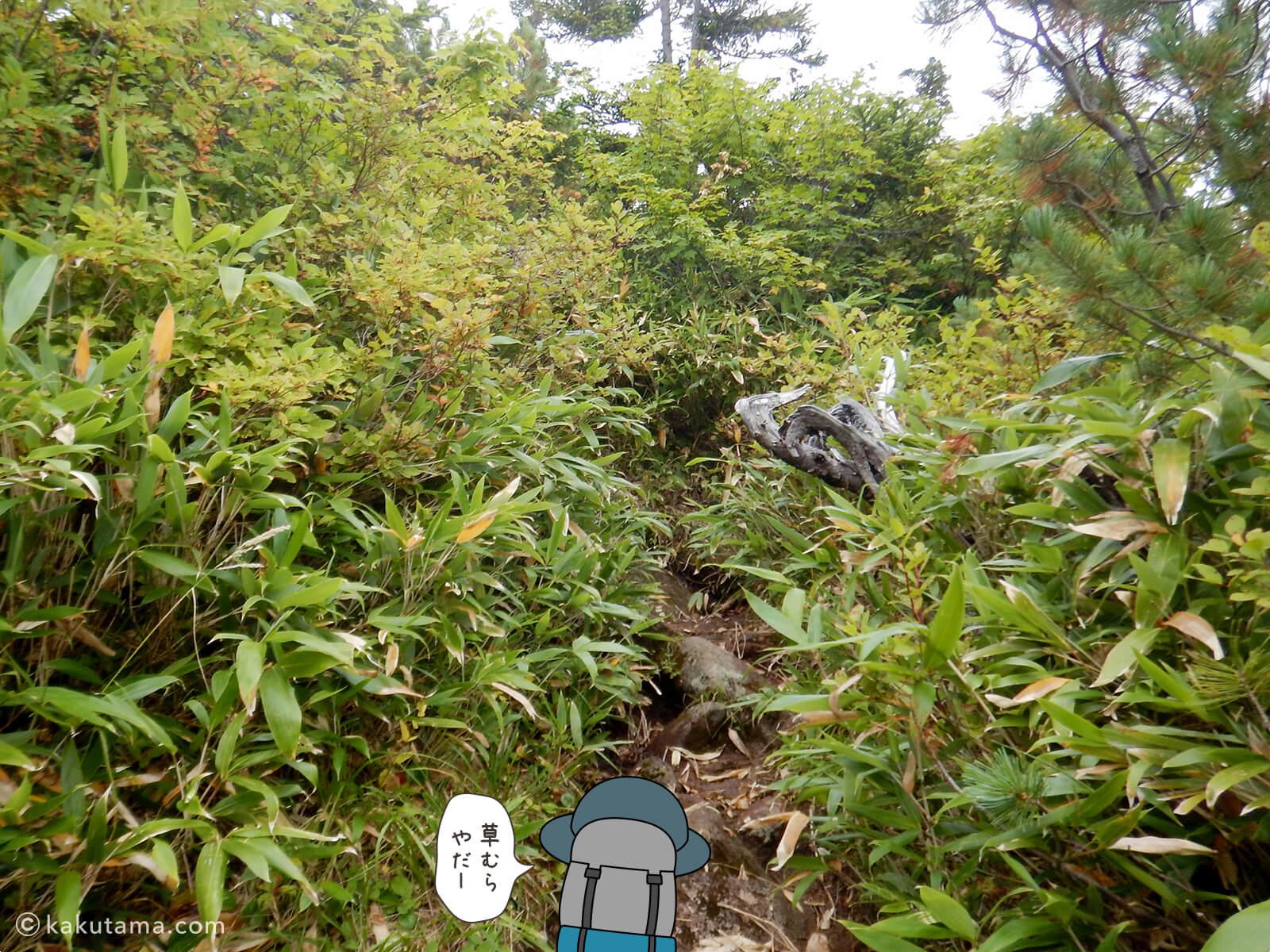 再び樹林帯を登る3