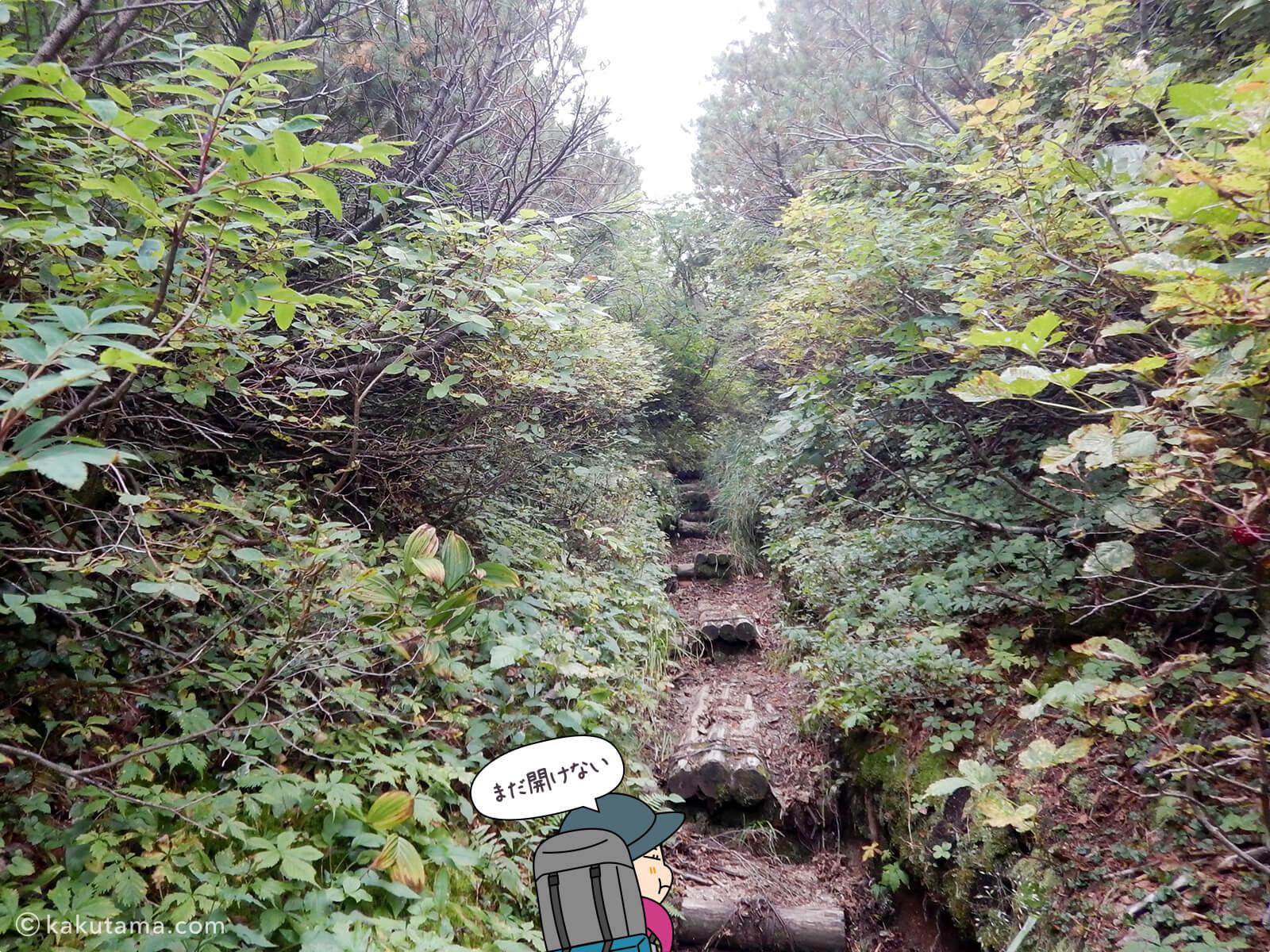 木道を登っていく2
