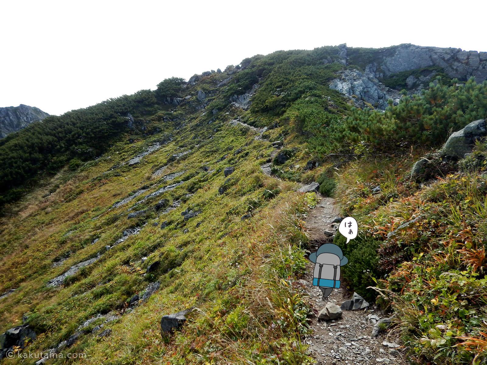 けっこう辛い水晶岳への登山道1
