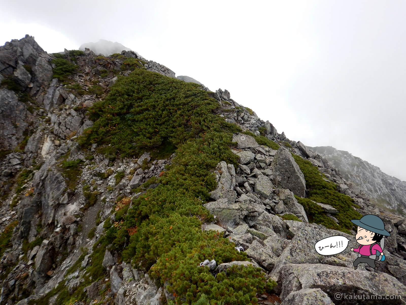 けっこう辛い水晶岳への登山道6