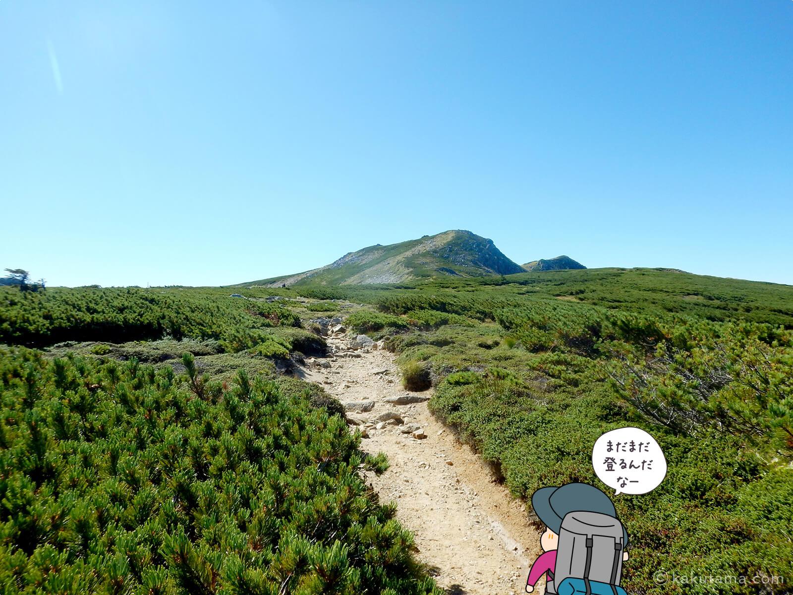 双六岳への稜線登り5