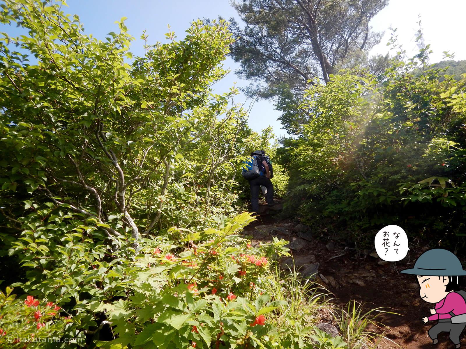 松手山登山コースを登る4