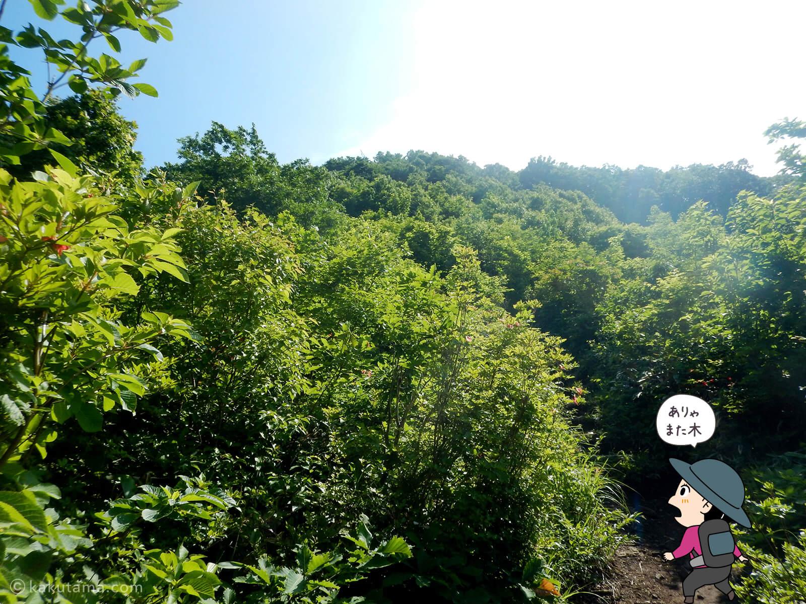 松手山登山コースを登る5