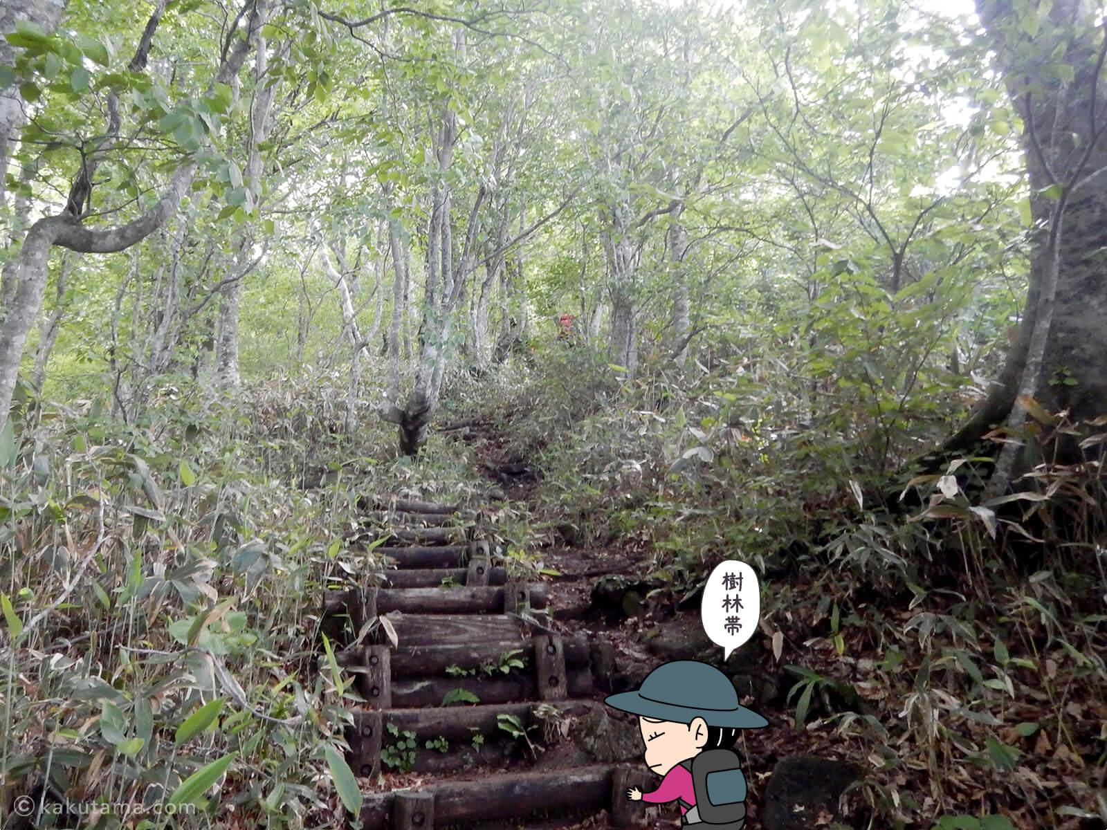 松手山登山コースを登る12