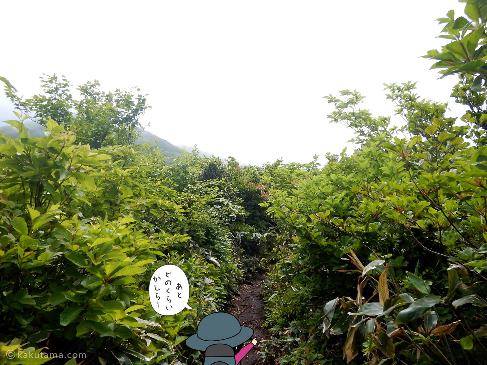 松手山から平標山山頂まで5